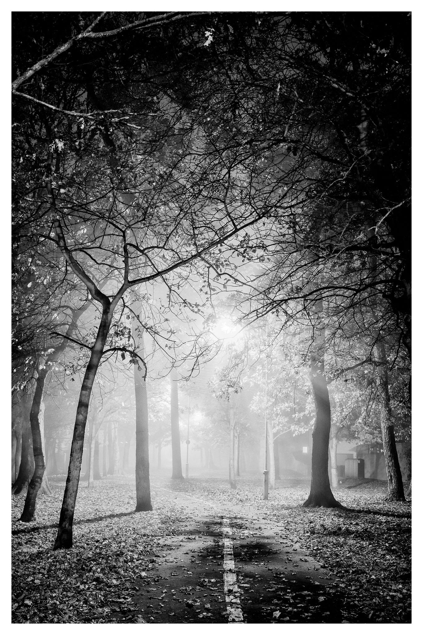 D71_1951-Edit.jpg